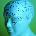 Phrenology Model by Lawrence Lawry