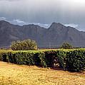 Picacho Peak Hedge by Robert Schambach