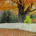 Picket Fence by Garry McMichael