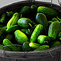 Pickling Cucumbers by Ms Judi