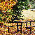 Picnic Table With Autumn Leaves by Elena Elisseeva
