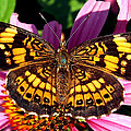 Picture Perfect    Butterfly 003 by George Bostian