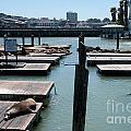 Pier 39 San Francisco by Carol Ailles