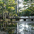 Pier In The Swamp by Ester  Rogers