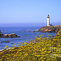 Pigeon Point Lighthouse California Coast by Mike Nellums