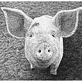 Piglet by Scott Woyak