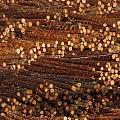 Pile Of Logs, Peeled And Ready by David Nunuk