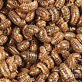 Pill Bugs by Ted Kinsman