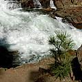 Pine And Falls Glen Alpine Falls by LeeAnn McLaneGoetz McLaneGoetzStudioLLCcom
