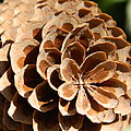 Pine Cone  by Chalet Roome-Rigdon