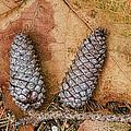 Pine Cones And Leaves by Deborah Benoit