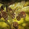 Pine Cones No.056 by Randall Nyhof