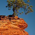Pine On Rock by Ralf Kaiser