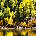 Pine Reflection At Georgetown Lake Colorado by Beth Riser