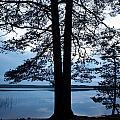 Pine Silhuette by Jouko Lehto