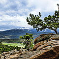 Pine Tree And Mountains by Alan Hutchins