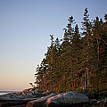 Pine Trees Along The Rocky Coastline by Hannele Lahti