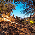 Pine Trees In El Chorro. Spain by Jenny Rainbow