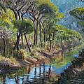 Pine Wood Reflections by Marco Busoni