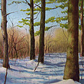 Pines In Winter by Marcus Moller