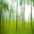 Pines by Scott Pellegrin