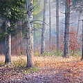 Pinewoods by Richard Sellence