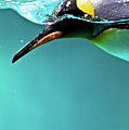 Pinguin by Www.photo-chick.com