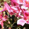 Pink Alstroemeria  by Elaine Plesser