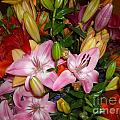 Pink And Color Lilies by Liliana Ducoure