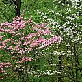 Pink And White by Aimee L Maher ALM GALLERY