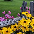 Pink And Yellow Flowers by David Chapman