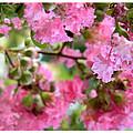 Pink Blooms by Nada Meeks
