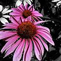 Pink Cutout by Trish Hale