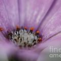 Pink Daisy by Yumi Johnson