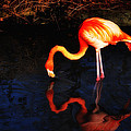 Pink Flamingo  by Bill Cannon