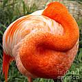 Pink Flamingo Sleep by Rebecca Margraf