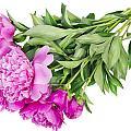 Pink Floral Summer by Aleksandr Volkov