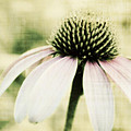 Pink Flower by Julie Hamilton