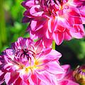 Pink Flower Pair by Steve McKinzie