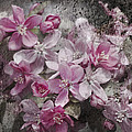 Pink Flowering Crabapple And Grunge by Kathy Clark