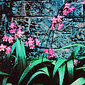 Pink Flowers Gray Wall by Bob Whitt