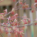 Pink Flowers by Stefa Charczenko