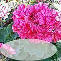 Pink Geranium Greeting Card Blank by Debbie Portwood