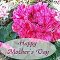 Pink Geranium Greeting Card Mothers Day by Debbie Portwood