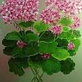 Pink Geranium by Peggy Miller