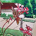 Pink Geranium Sketchbook Project Down My Street by Irina Sztukowski