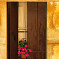 Pink Geraniums Brown Shutters And Yellow Window In Italy by Greg Matchick