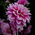 Pink II by Athena Mckinzie