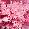Pink by Kristin Elmquist