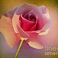 Pink Lady by RC DeWinter